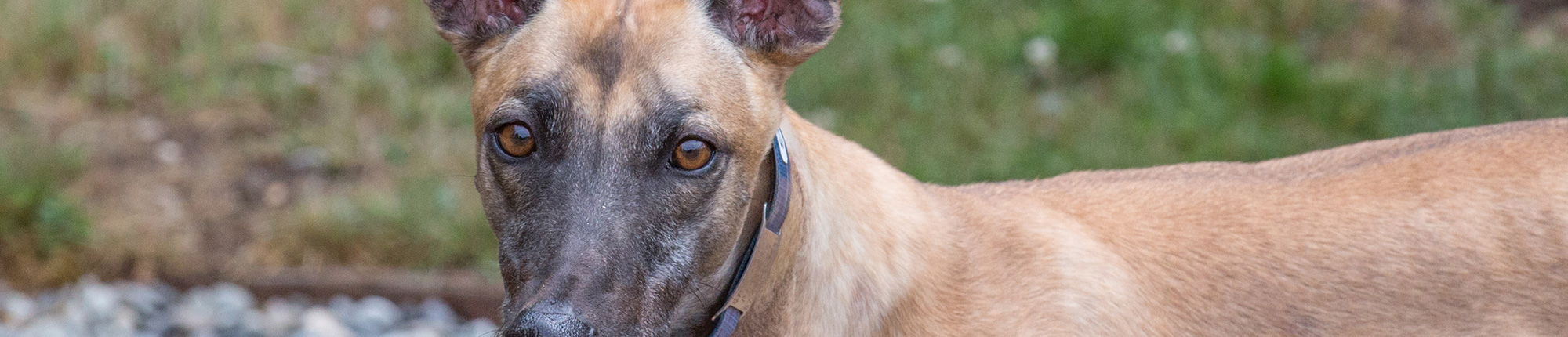 greyhound wishlist